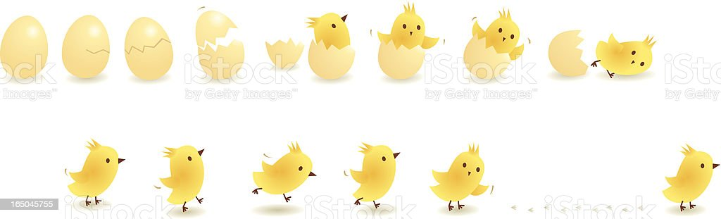Chick vector art illustration