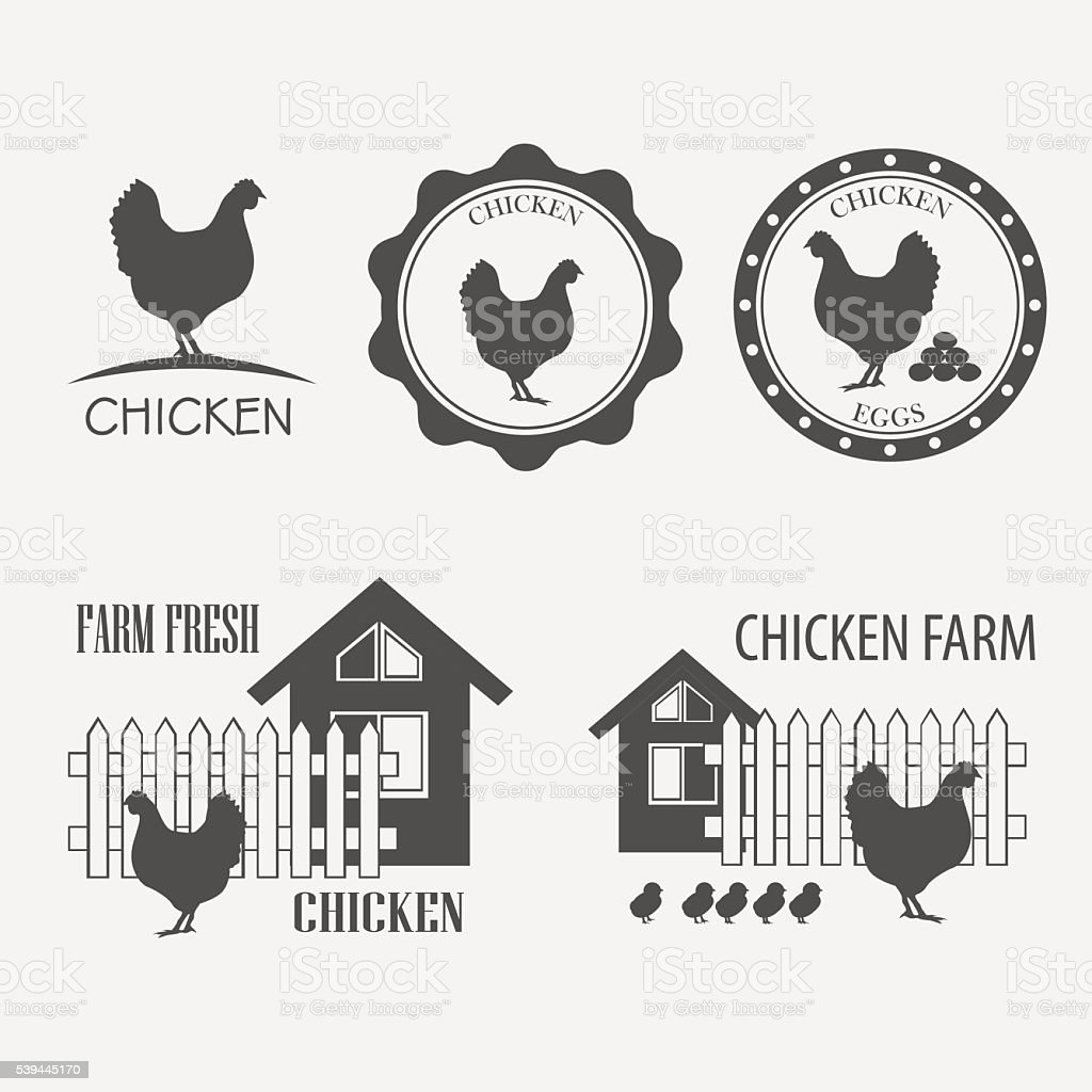 chicken farm and eggs vector art illustration