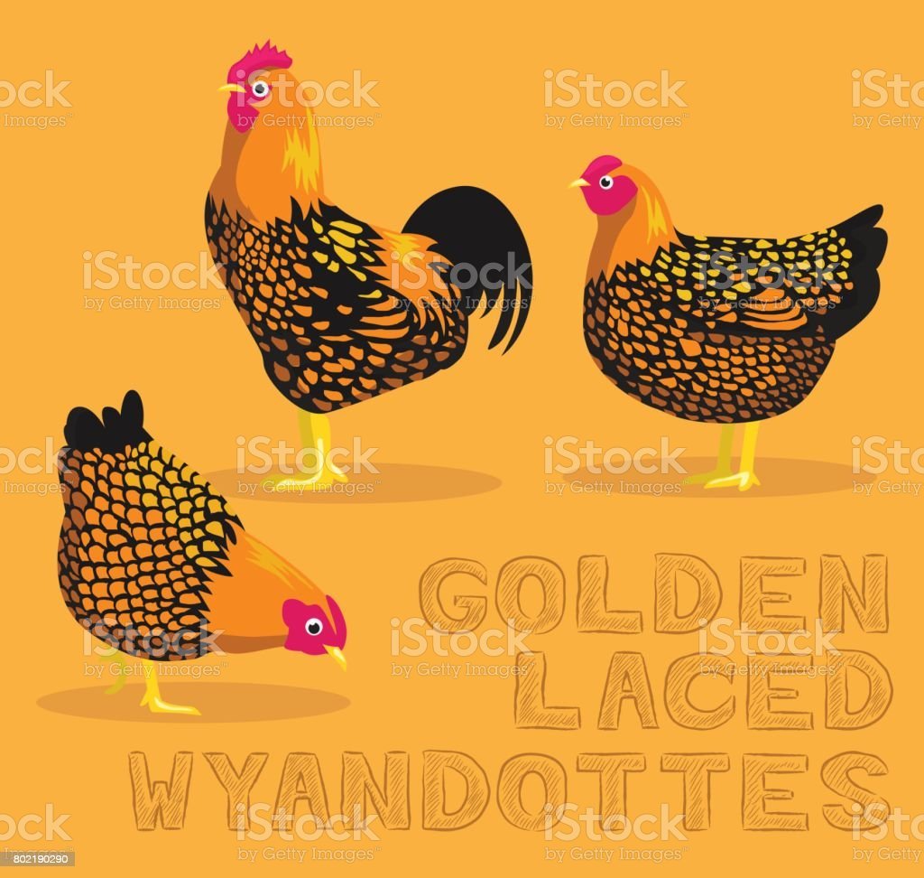 Chicken Golden Laced Wyandottes Cartoon Vector Illustration vector art illustration