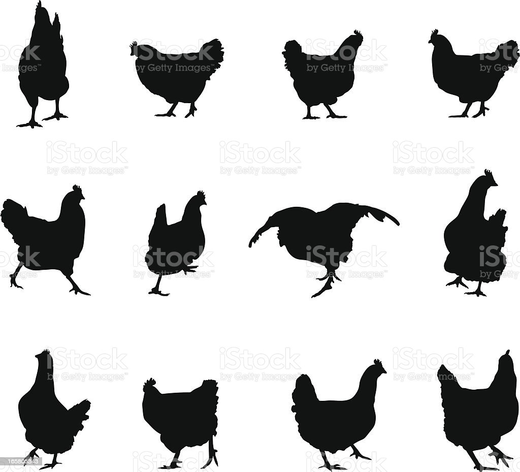 Chicken Silhouette. royalty-free stock vector art