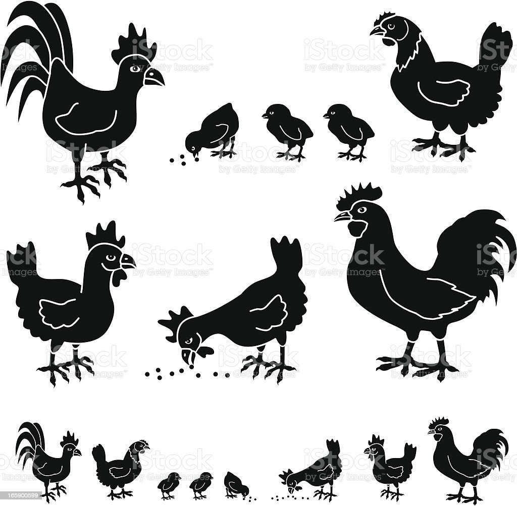 chickens and roosters vector art illustration