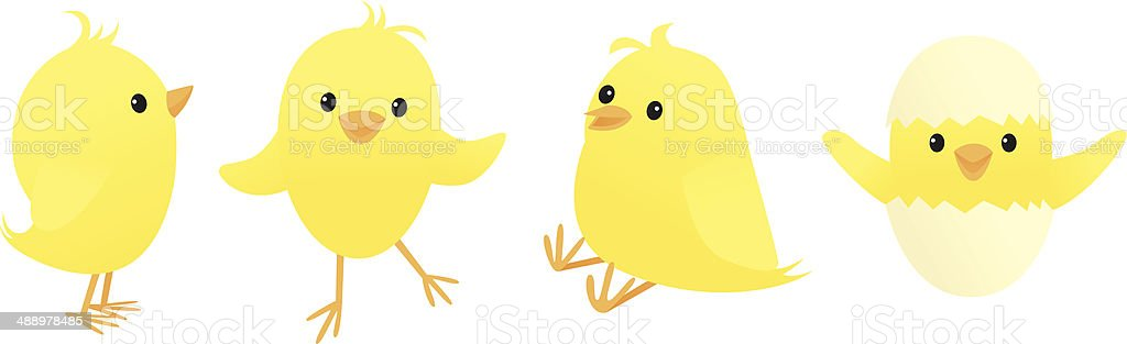 Chicks vector art illustration