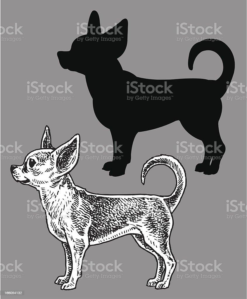 Chihuahua  - Dog, domestic pet royalty-free stock vector art