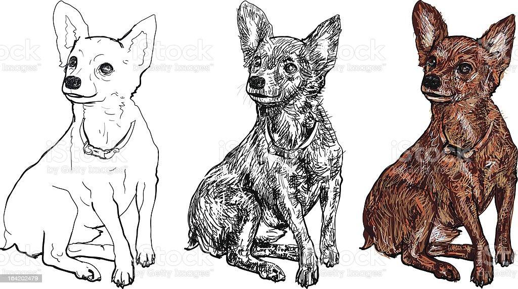 Chihuahua royalty-free stock vector art