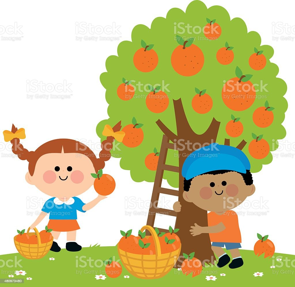 Children picking oranges vector art illustration