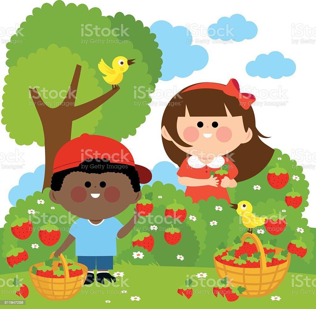 Children picking strawberries vector art illustration