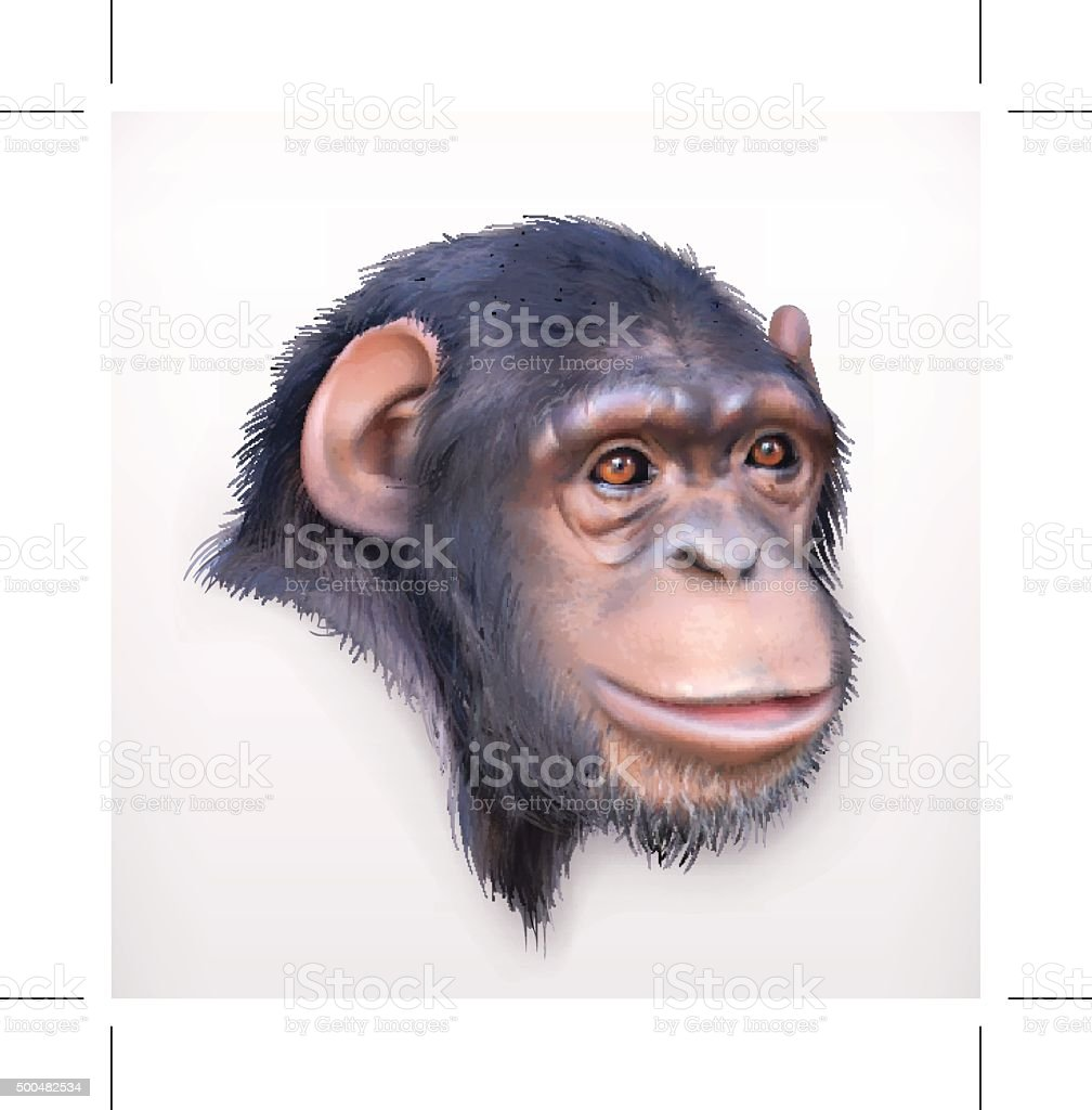 Chimpanzee head  illustration vector art illustration
