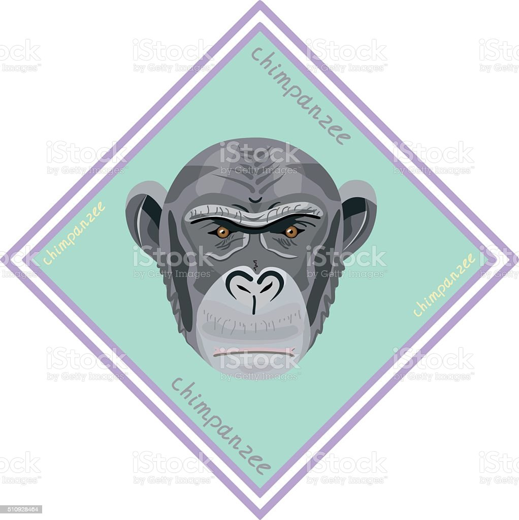 Chimpanzee monkey head isolated on blue cover.  Illustration. vector art illustration