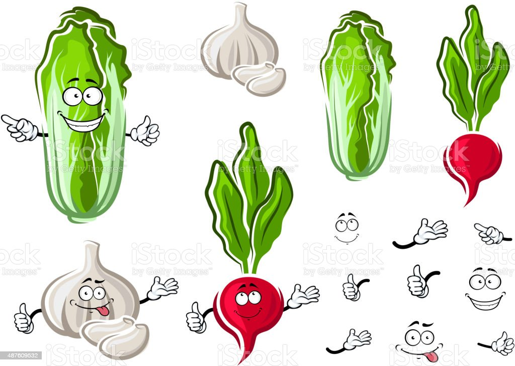 Chinese cabbage, garlic and radish vegetables vector art illustration
