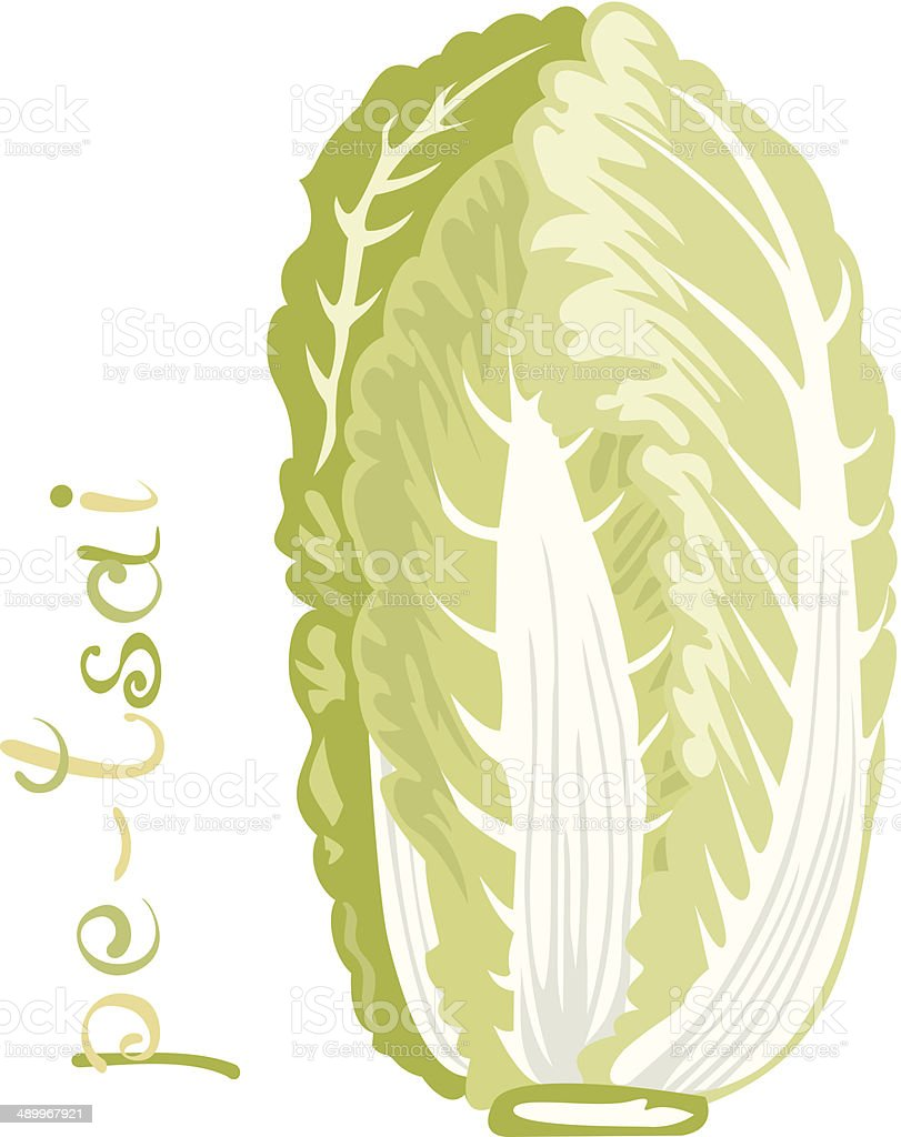 Chinese Cabbage vector art illustration