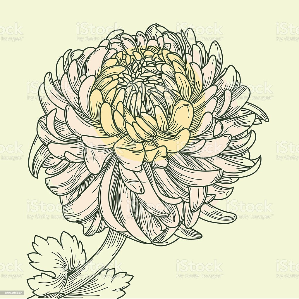 Chinese Chrysanthemum royalty-free stock vector art