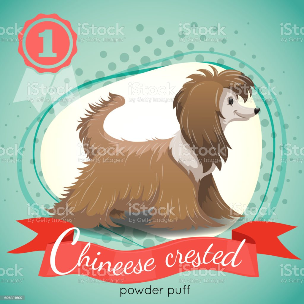 Chinese Crested Powder Puff Dog standing. vector art illustration