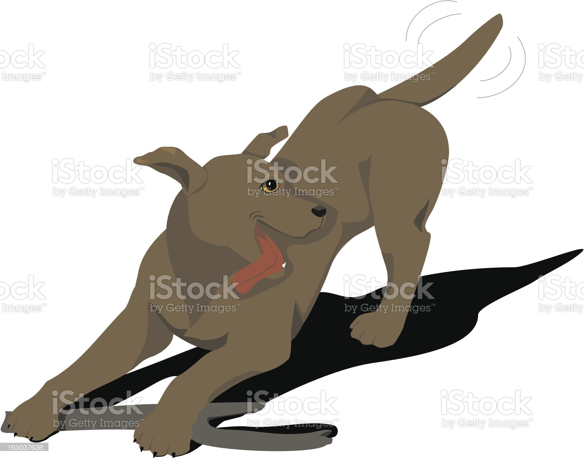 Chocolate Labrador dog Playing with a stick royalty-free stock vector art