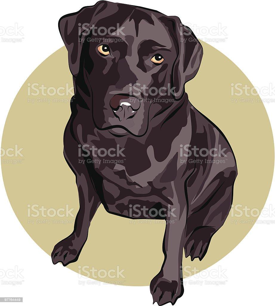 Chocolate Labrador royalty-free stock vector art