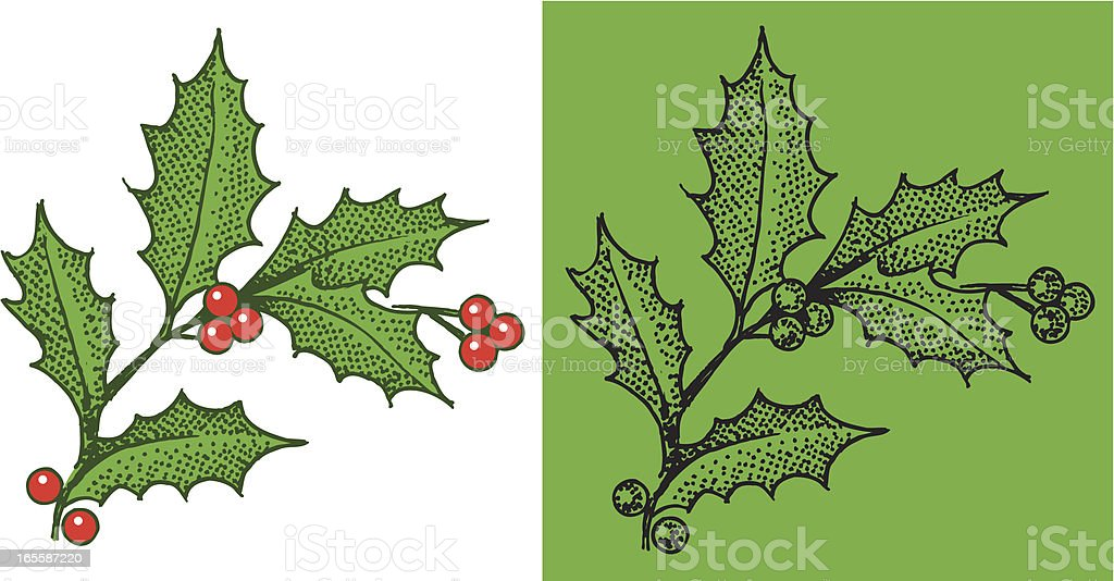 Christmas Holly & Berries royalty-free stock vector art