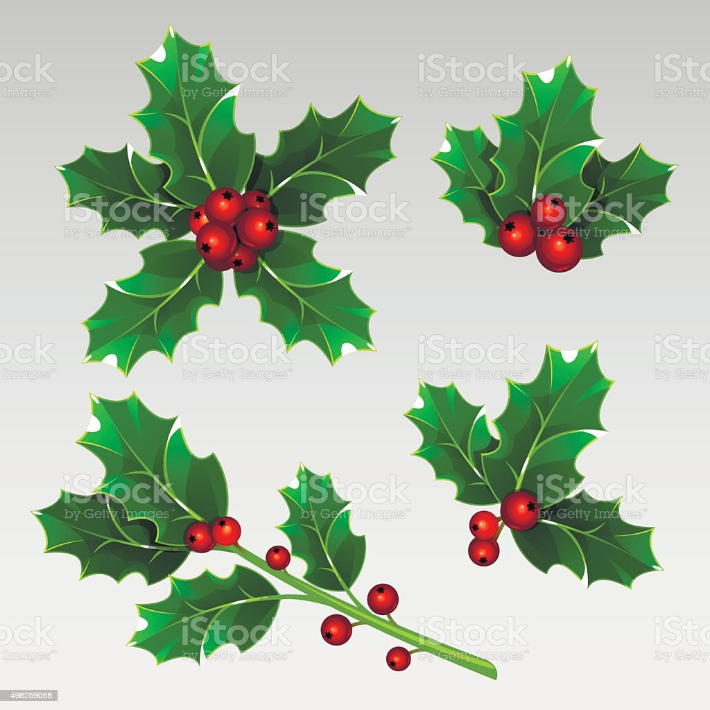 Christmas holly vector art illustration