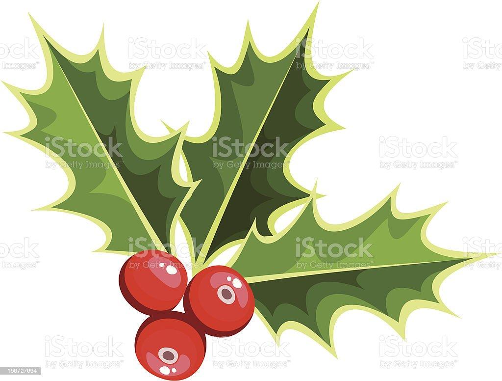 Christmas holly. Vector illustration. royalty-free stock vector art