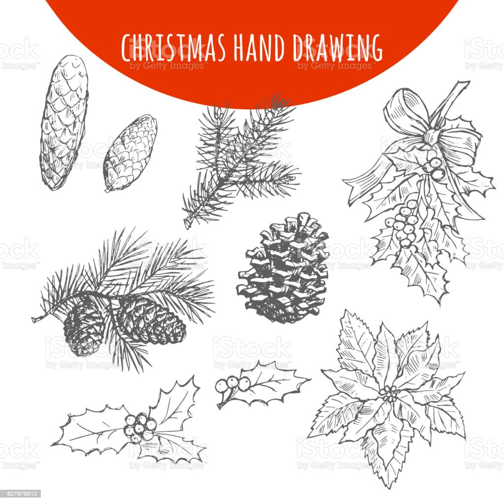 Christmas pine, fir tree branches and cones vector sketch vector art illustration