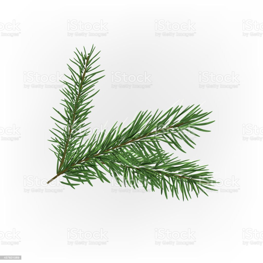 Christmas tree branch vector art illustration