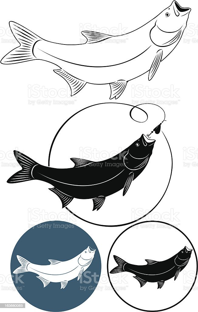 chub fish royalty-free stock vector art