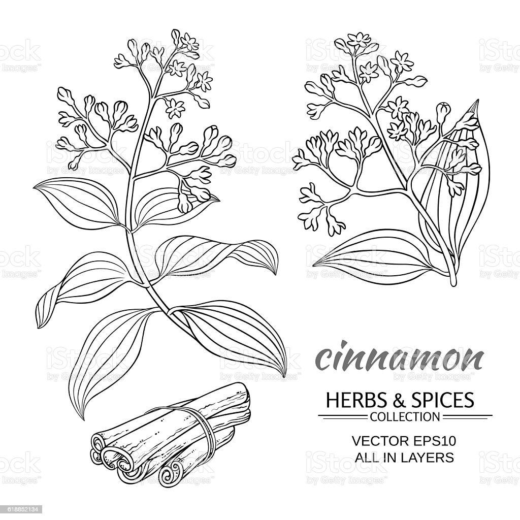 cinnamon vector set vector art illustration