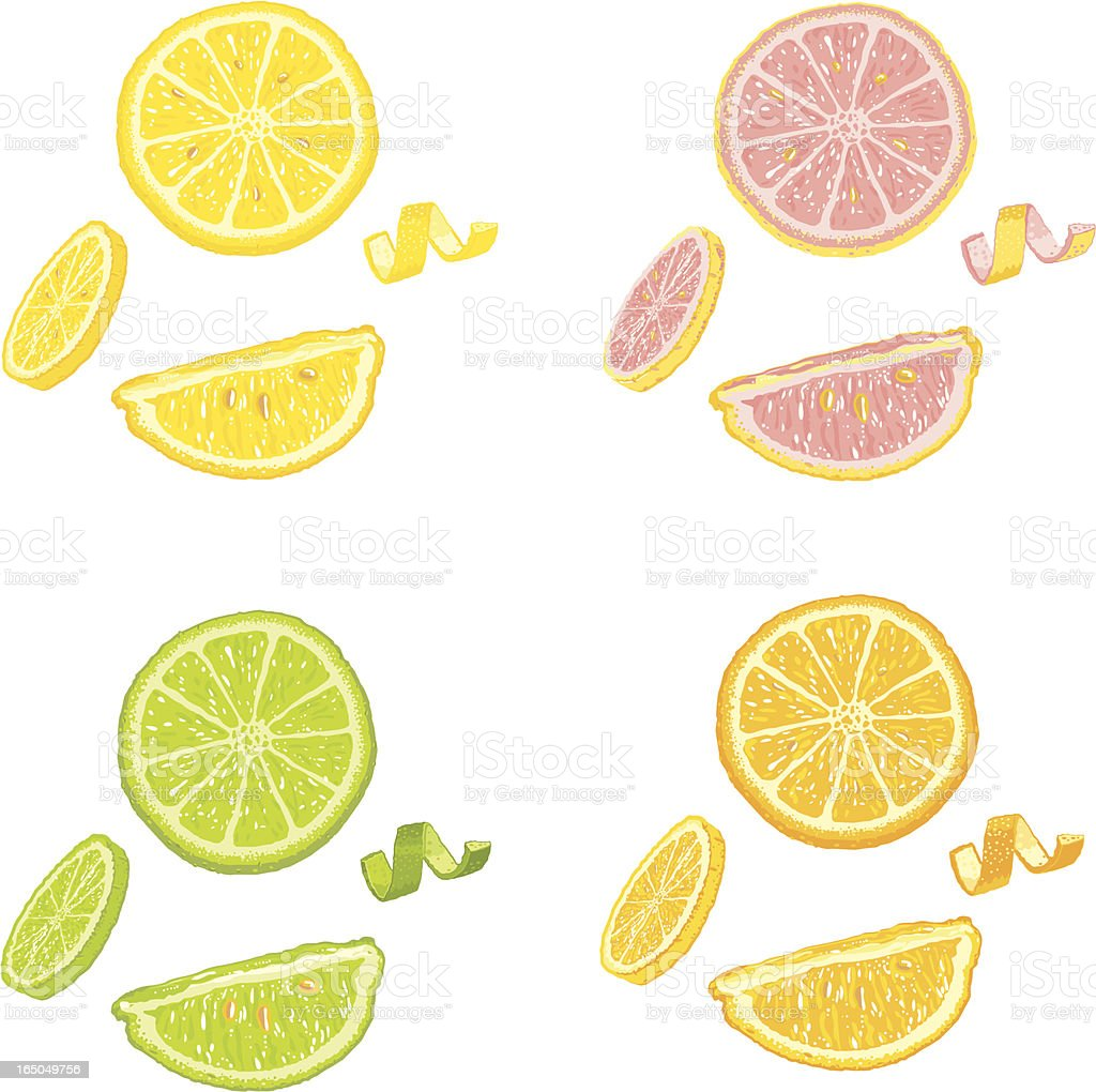 Citrus Fruit Slices and Wedges vector art illustration