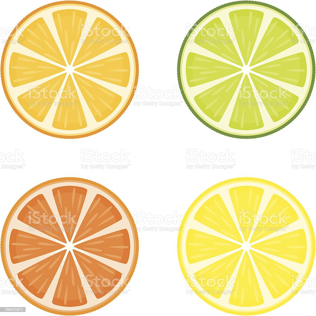 Citrus Fruit Slices vector art illustration