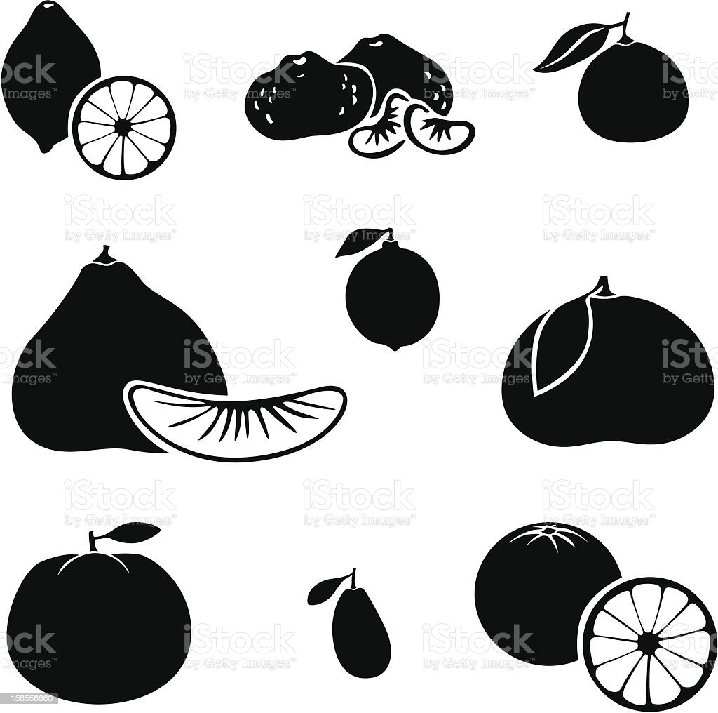 Citrus fruit vector art illustration