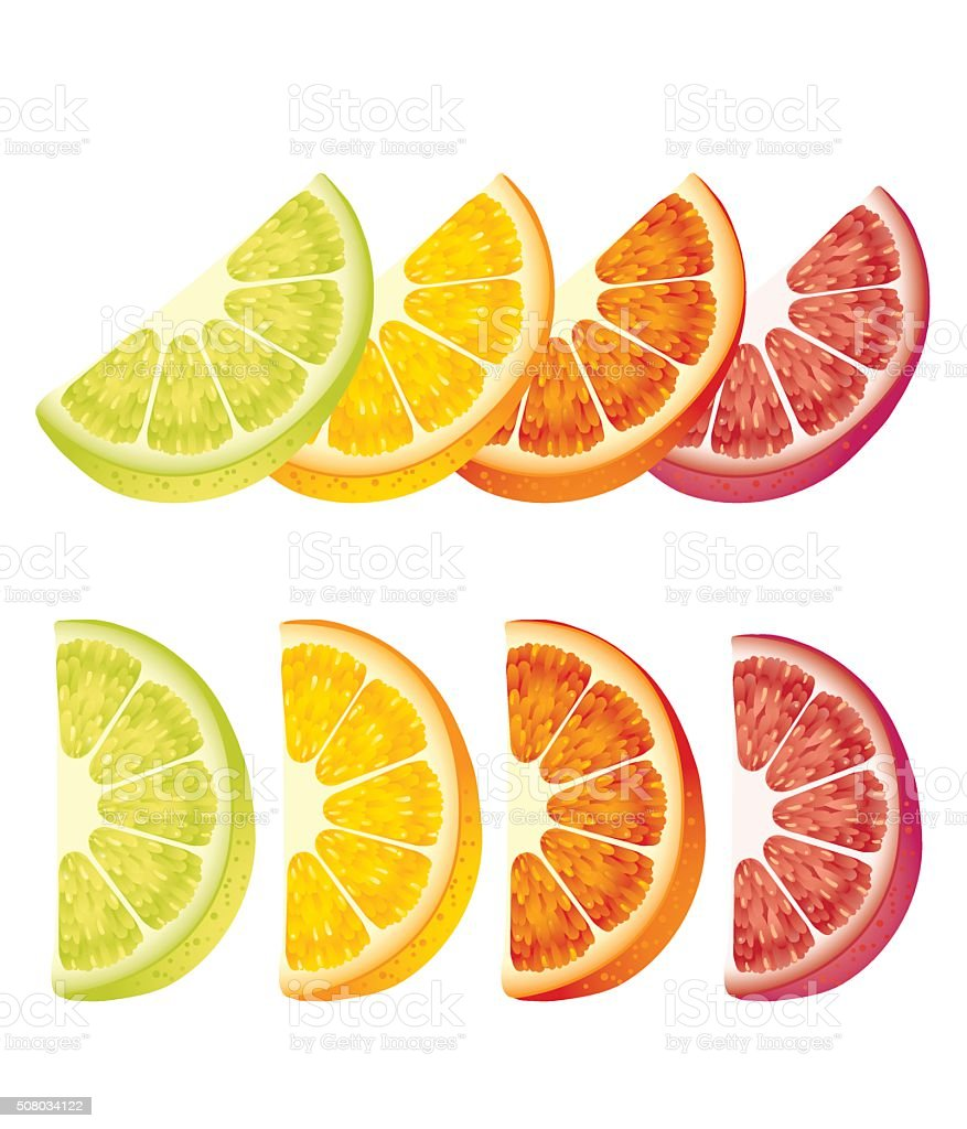 Citrus fruits slices vector art illustration
