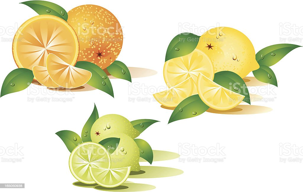 Citrus fruits royalty-free stock vector art