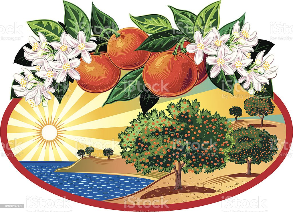citrus grove in oval frame royalty-free stock vector art