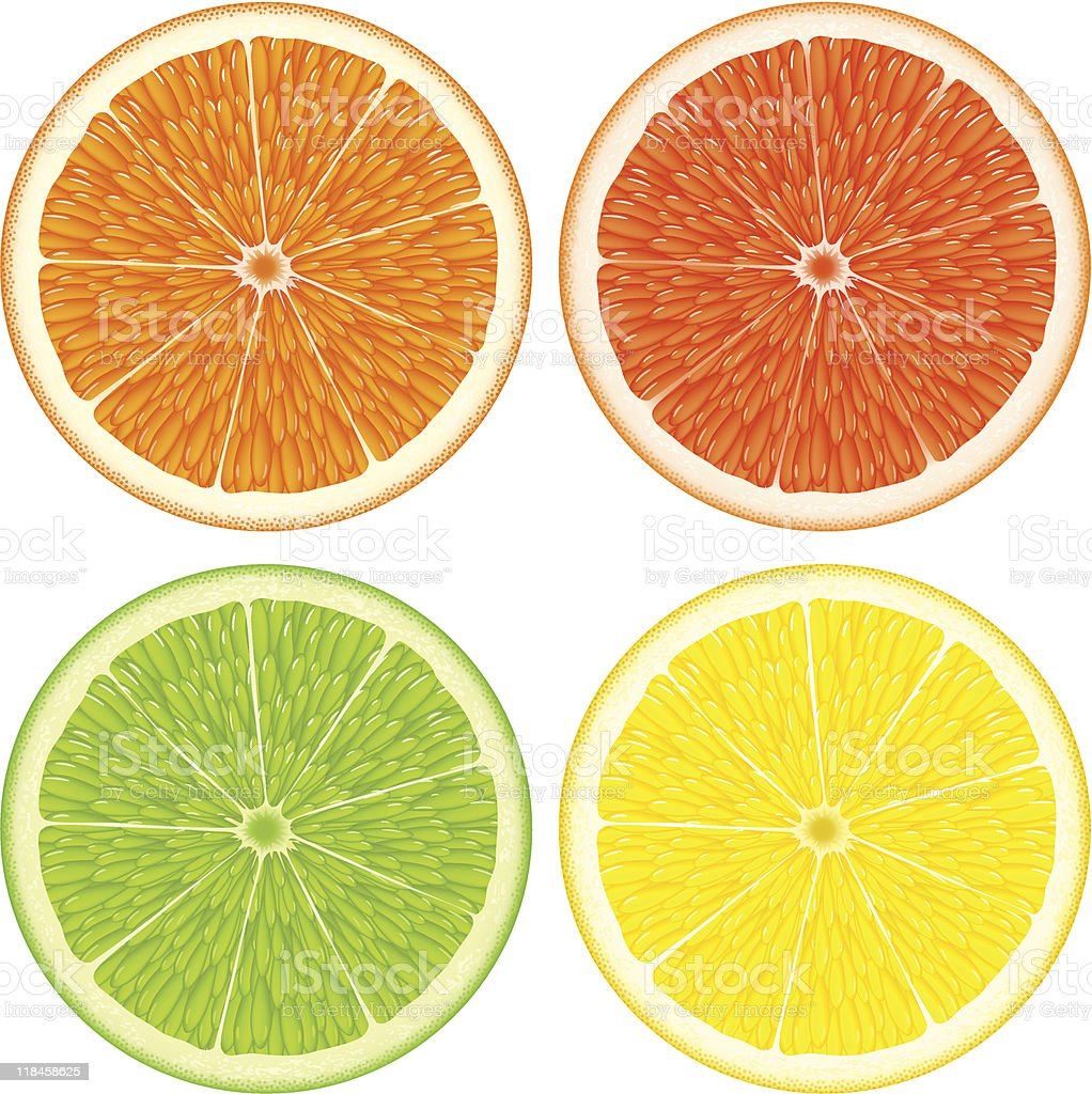 Citrus slices royalty-free stock vector art
