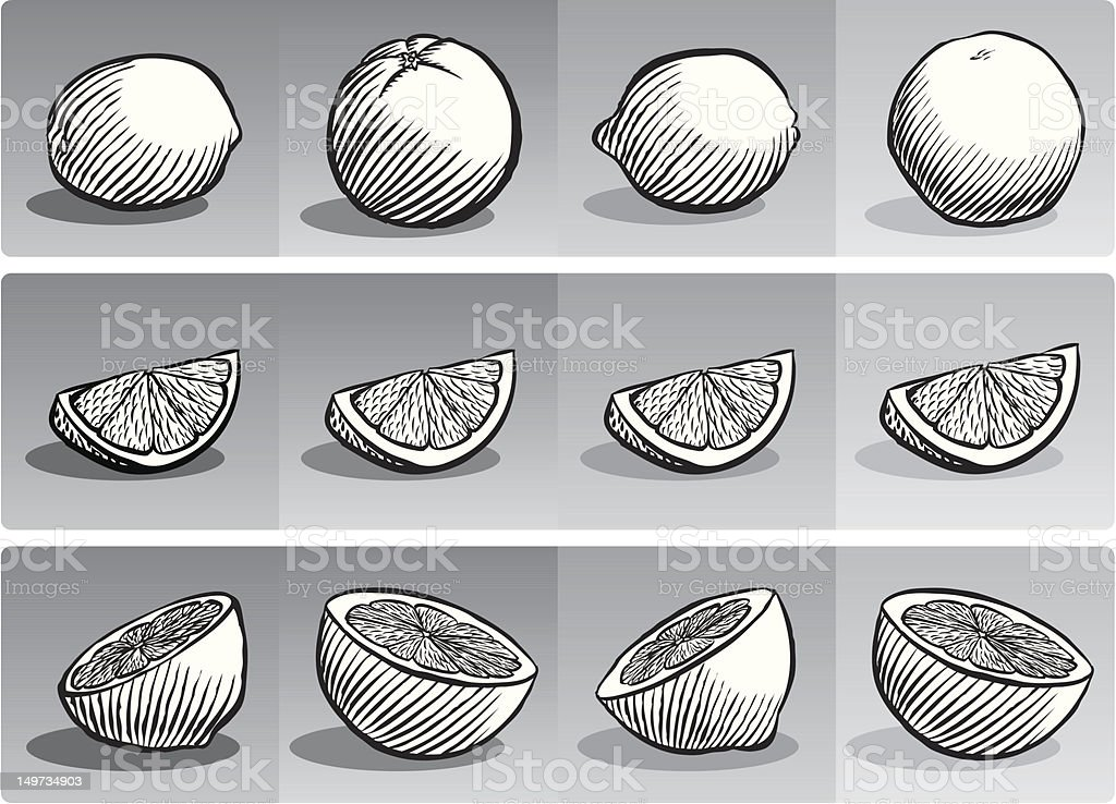 Citrus (B & W) vector art illustration