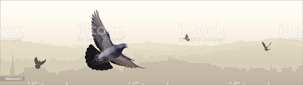 City Pigeons vector art illustration