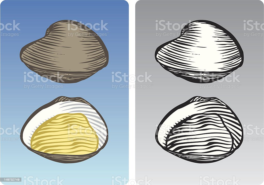 Clams vector art illustration