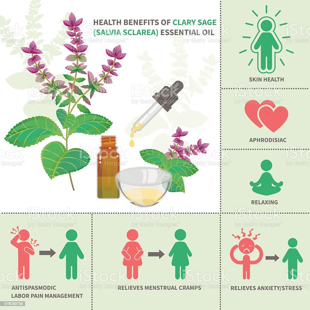 Clary sage Essential Oil Benefits vector art illustration