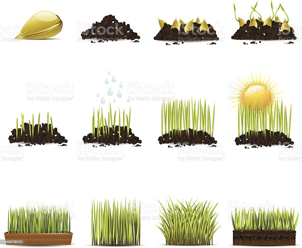 Clip art animation of progression of growing grass vector art illustration