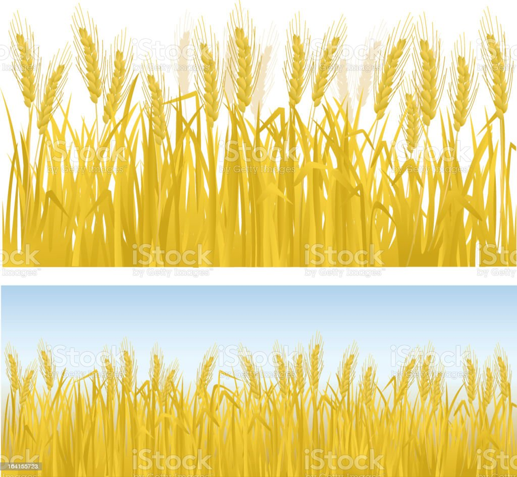 Clip art of rows of golden wheat vector art illustration