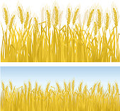Clip art of rows of golden wheat