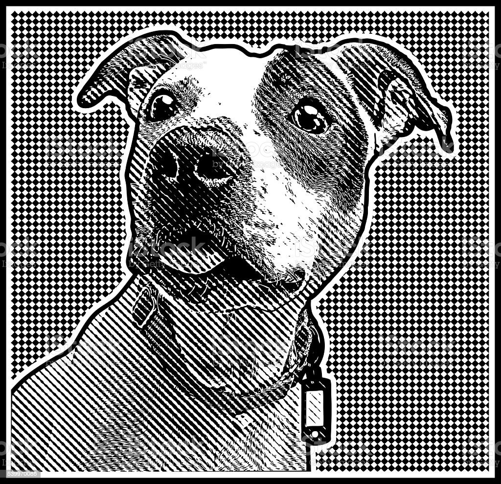 Close up Engraving portrait of a Pit Bull vector art illustration