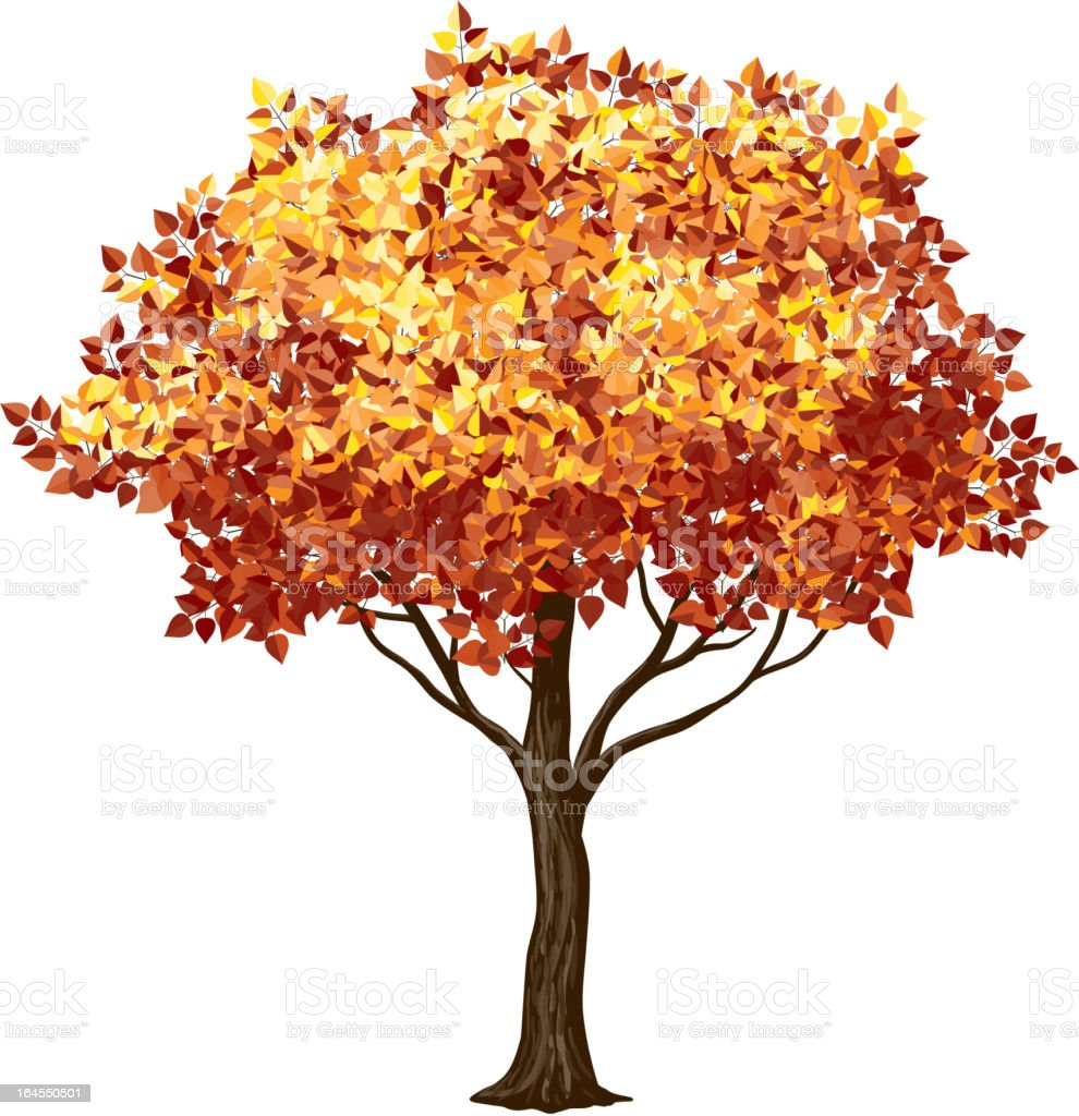 Close-up of a tree in the fall with orange leaves on white vector art illustration