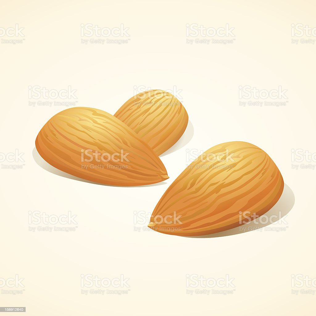 Close-up of cartoon depiction of almond nuts vector art illustration
