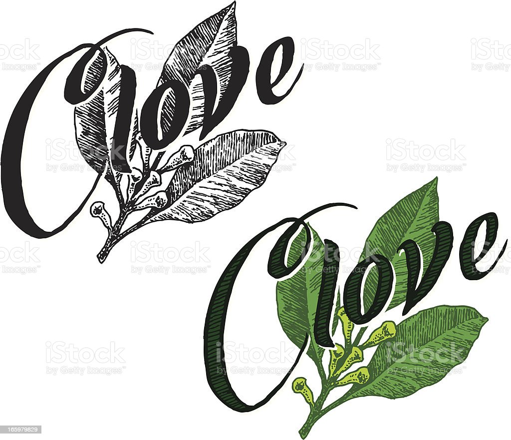 Clove with Text vector art illustration