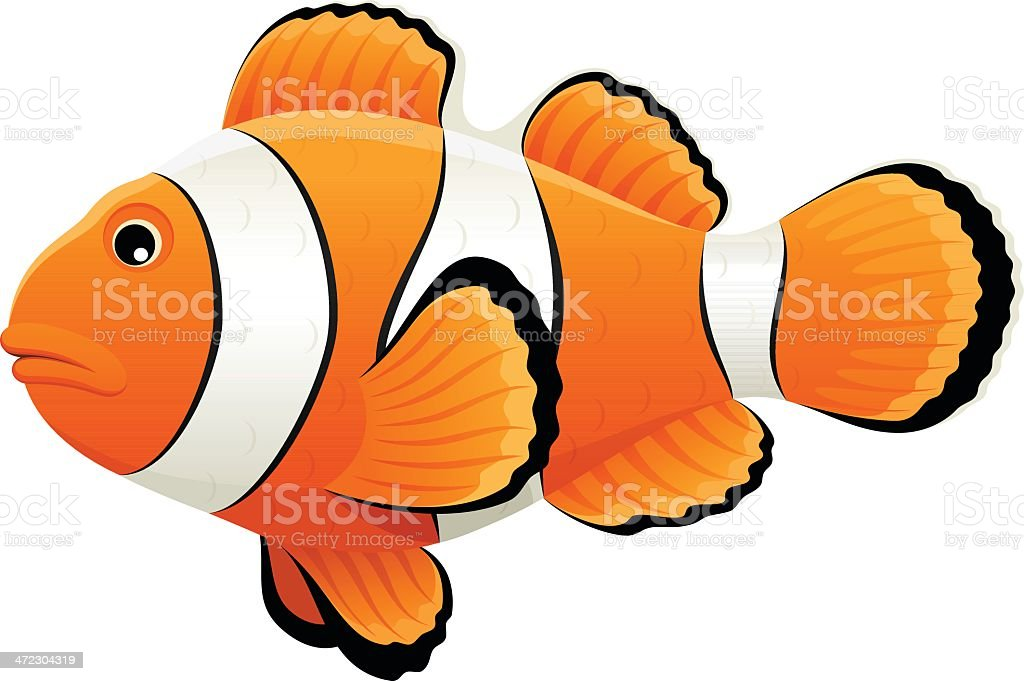 clown fish clip art  vector images   illustrations istock clown fish clip art black and white Clown Fish Line Drawing