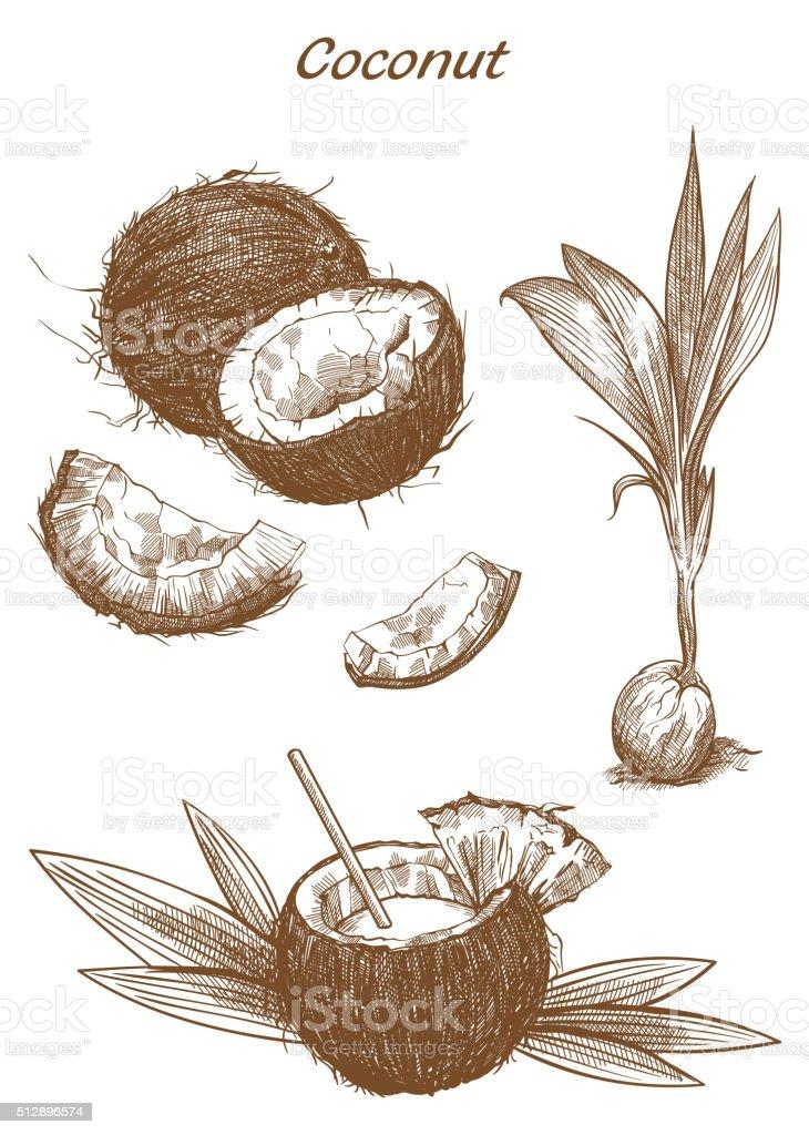 cocktail of coconut milk vector art illustration