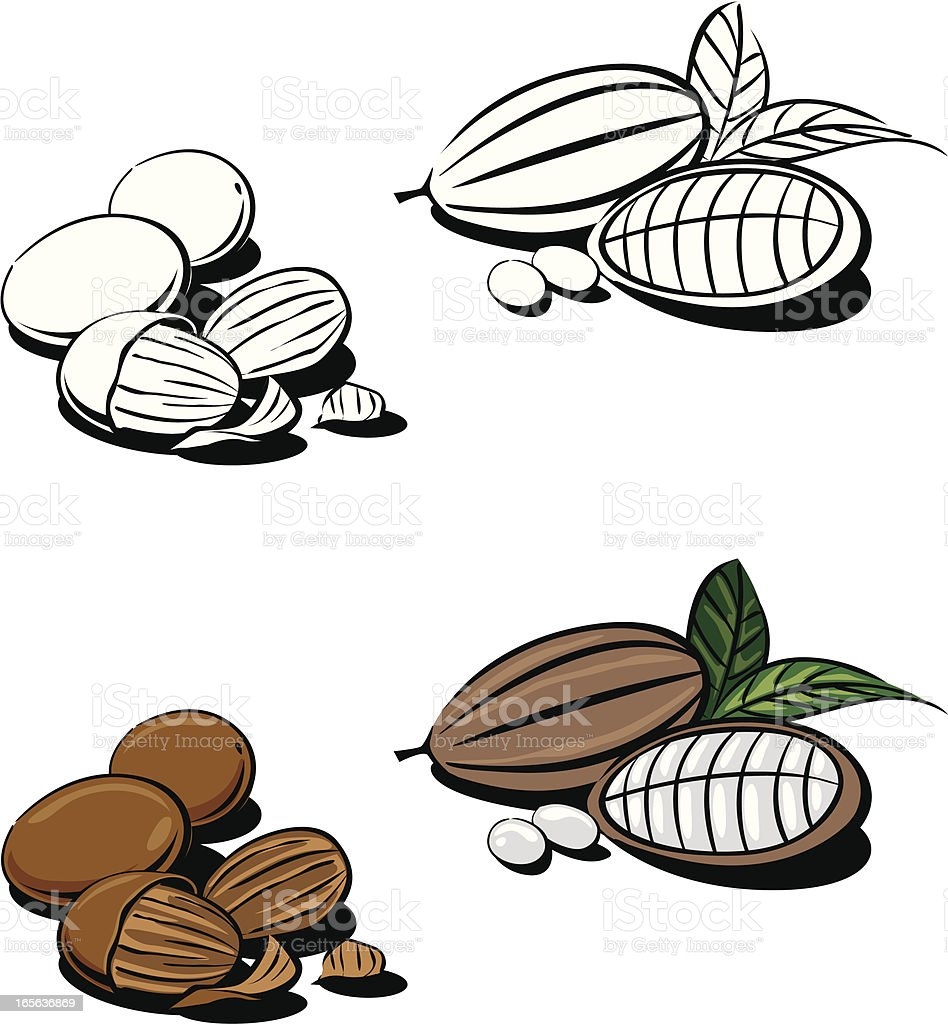cocoa and shea nut royalty-free stock vector art