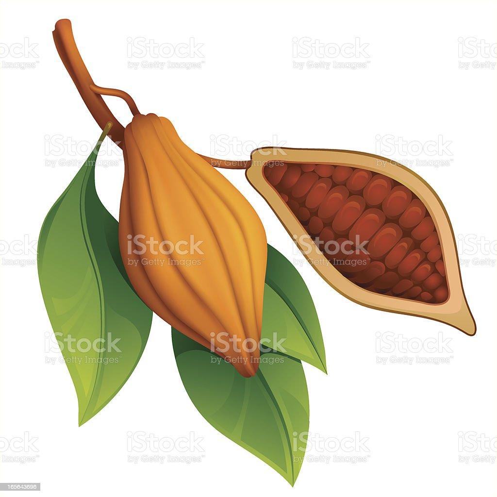 Cocoa vector art illustration