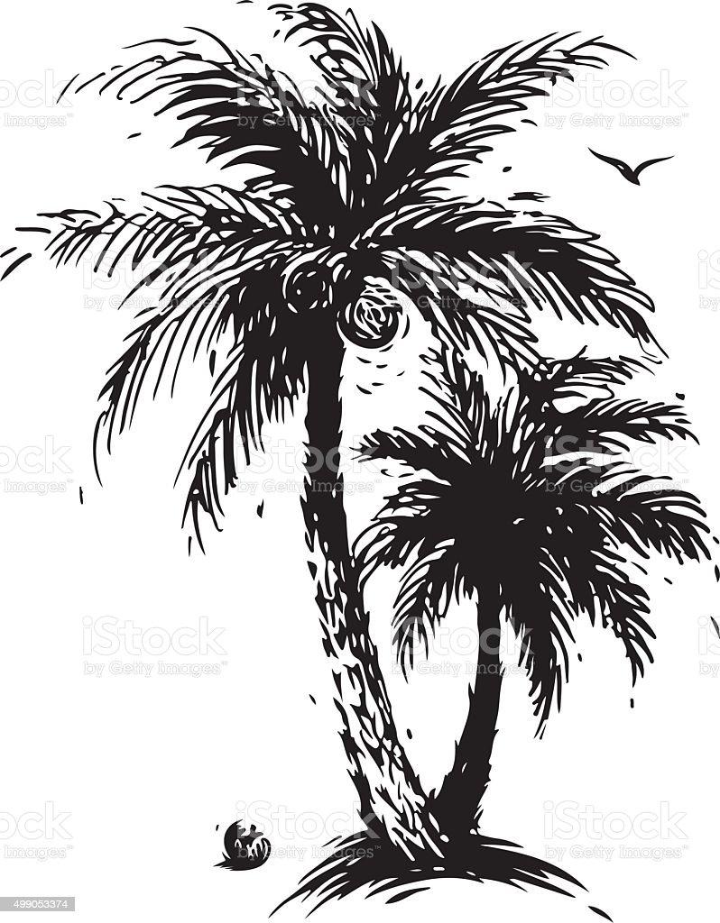 Coconut palm tree vector art illustration