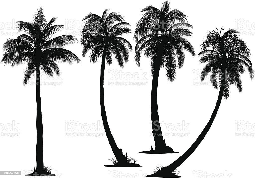 Coconut Tree vector art illustration