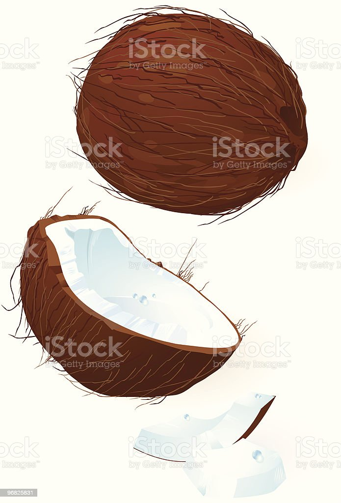 Coconut royalty-free stock vector art